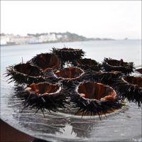 Milu-peter-cadaques-garates