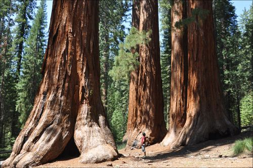 Sequoias-xavi-00