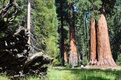 Sequoias-xavi-02