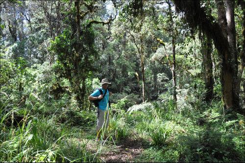 Kili-xavier-selva
