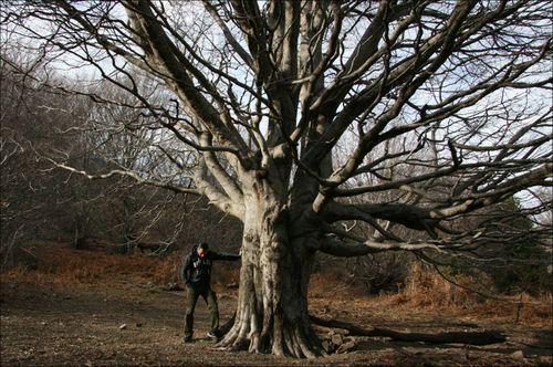 Montseny-arbre