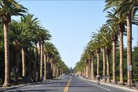 Stanford-xavi-palm-04