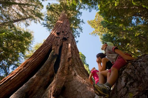Tree-yosemite-kids-01