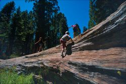 Tree-yosemite-kids-04