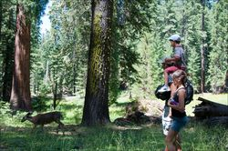 Tree-yosemite-kids-05